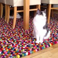 chat-blanc-rectangle-multi-couleur-tapis-de-feutre